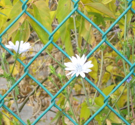 Chain Link Fence - Landscaping by BK Outdoor Services